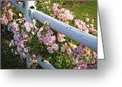 Wooden Home Greeting Cards - Fence with pink roses Greeting Card by Elena Elisseeva