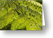 Bedroom Art Greeting Cards - Fern 3 Greeting Card by Cheryl Young