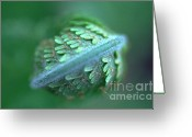 Brake Greeting Cards - Fern close up Greeting Card by Heiko Koehrer-Wagner