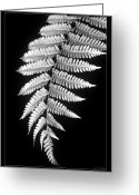 Black And White Floral Greeting Cards - Fern Dance Greeting Card by Holly Kempe