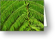 Rain Forest Greeting Cards - Fern Fronds Greeting Card by Carlos Caetano