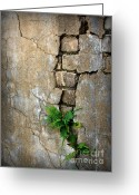 Old Wall Greeting Cards - Fern Life Greeting Card by Perry Webster