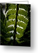 Forest Floor Photo Greeting Cards - Fern Greeting Card by Odd Jeppesen