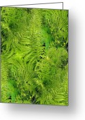Fiddle Head Fern Greeting Cards - Fern Greeting Card by Ron Bissett