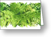 Ferns Greeting Cards - Fern Vignette Greeting Card by JQ Licensing