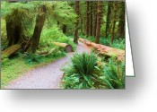 Lichen Image Greeting Cards - Ferns And Mosses Greeting Card by Heidi Smith