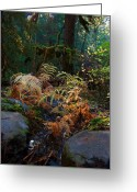 Forrest  Greeting Cards - Ferns Decline Greeting Card by Ed Boudreau