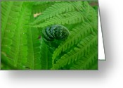 Featured Landscape Art Greeting Cards - Ferns Fine Art Prints Green Forest Fern Greeting Card by Baslee Troutman Fine Art Prints