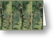 Fiddle Head Fern Greeting Cards - Ferns In The Forest Greeting Card by Marie Jamieson