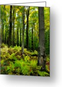 Acrylic Framed Greeting Cards - Ferns in the Forest - West Virginia Greeting Card by Dan Carmichael