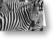 Fur Stripes Greeting Cards - Festival Of Stripes Greeting Card by Mars Lasar