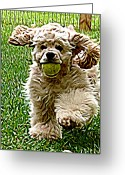 Cocker Spaniel Greeting Cards - Fetch Greeting Card by Laura Brightwood