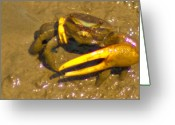 Fiddler Crab Greeting Cards - Fiddler Crab Pano Greeting Card by Bill Barber