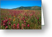 Landscapes Framed Prints Greeting Cards - Field of Clover Greeting Card by Kathy Yates