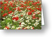 Blurry Greeting Cards - Field of daisies and poppies. Greeting Card by Bernard Jaubert