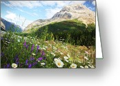 Travelling Greeting Cards - Field of daisies and wild flowers Greeting Card by Sandra Cunningham