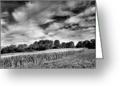 Cornfield Greeting Cards - Field of Dreams III Greeting Card by Steven Ainsworth