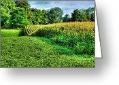 Cornfield Photo Greeting Cards - Field of Dreams IV Greeting Card by Steven Ainsworth