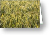Farming Greeting Cards - Field of Green Greeting Card by Mike McGlothlen