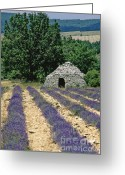 Shed Photo Greeting Cards - Field of lavender. Sault Greeting Card by Bernard Jaubert