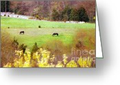 Quarter Horses Greeting Cards - Field of My Dreams Horses Greeting Card by Peggy  Franz
