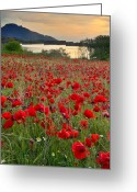 Lanscape Photo Greeting Cards - Field of poppies at the lake Greeting Card by Guido Montanes Castillo