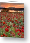Lanscape Photo Greeting Cards - Field Of Poppies Greeting Card by Guido Montanes Castillo