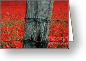 Barbed Wire Greeting Cards - Field of poppies with a wooden post. Greeting Card by Bernard Jaubert