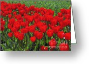 Spring Tulip Greeting Cards - Field of Red Tulips Greeting Card by Sharon  Talson