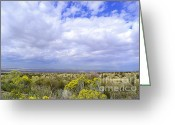 Storm Prints Greeting Cards - Field of Spring Greeting Card by Andrea Hazel Ihlefeld