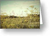 Green Day Greeting Cards - Field of wild dill in the afternoon sun  Greeting Card by Sandra Cunningham