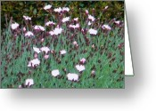 Creative Passages Photo Greeting Cards - Field Of Wonder Greeting Card by Cassandra Donnelly