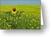Estephy Sabin Figueroa Greeting Cards - Field of Yellow Greeting Card by Estephy Sabin Figueroa