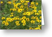 Black Eyed Susans Greeting Cards - Field of Yellow Flowers Greeting Card by Sabrina L Ryan