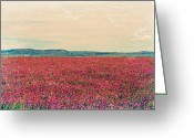 Alberta Foothills Landscape Greeting Cards - Fields of Heaven Greeting Card by Leanna Lomanski
