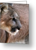 Puma Greeting Cards - Fierce Greeting Card by Sabrina L Ryan