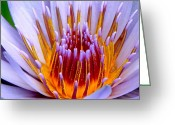 Bleu Greeting Cards - Fiery Eloquence Greeting Card by Karon Melillo DeVega