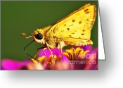 Pollinate Greeting Cards - Fiery Skipper  Greeting Card by Thomas R Fletcher