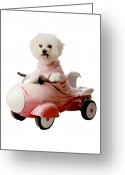 Michael Le Dray Greeting Cards - Fifi is ready for blas off Greeting Card by Michael Ledray