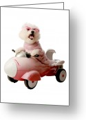 Michael Le Dray Greeting Cards - Fifi is ready for take off  Greeting Card by Michael Ledray