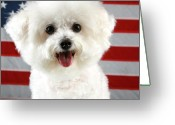 Bichon Greeting Cards - Fifi Loves America Greeting Card by Michael Ledray