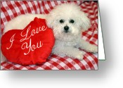 Bichon Greeting Cards - Fifi loves you Greeting Card by Michael Ledray