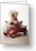 Michael Le Dray Greeting Cards - Fifi ready for take off Greeting Card by Michael Ledray