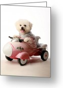 Michael Le Dray Greeting Cards - Fifi the Bichon Frise and her Rocket Car Greeting Card by Michael Ledray