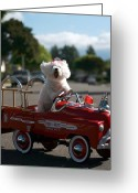 Bichon Greeting Cards - Fifi the bichon frise to the Rescue Greeting Card by Michael Ledray
