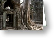 Asian Architecture And Art Greeting Cards - Fig Tree Growing Over Crumbling Ruins Greeting Card by Rebecca Hale