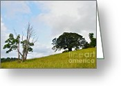 Fig Tree Greeting Cards - Fig Tree on a Hill Greeting Card by Kaye Menner