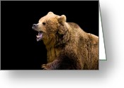 James Barnes Greeting Cards - Fighting Bear Greeting Card by James Barnes
