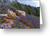 Blue Bonnets Greeting Cards - Figueroa Mountain Splendor Greeting Card by Kurt Van Wagner