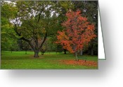 Red Leaves Greeting Cards - Finch Arboretum Autumn 1 - Spokane Washington Greeting Card by Daniel Hagerman